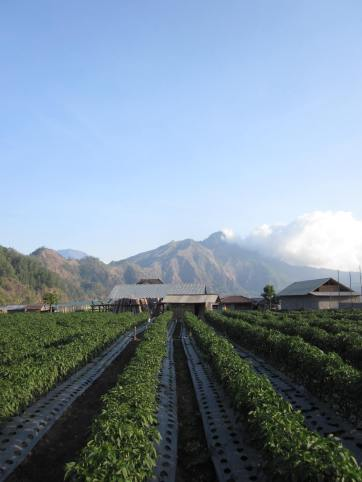 Songan Village at the feet of Mounth Batur
